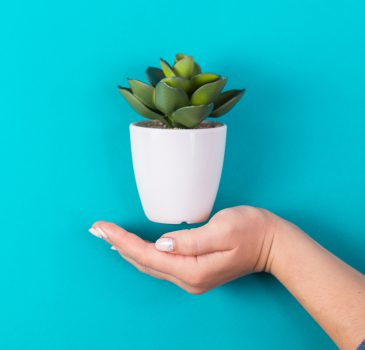 idea of a hand and an artificial plant. minimalism