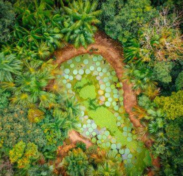 Jardim Botânico de Manaus